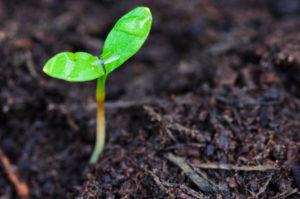 Sostenibilidad 56000131 M 300x199 sostenibilidad 56000131 m